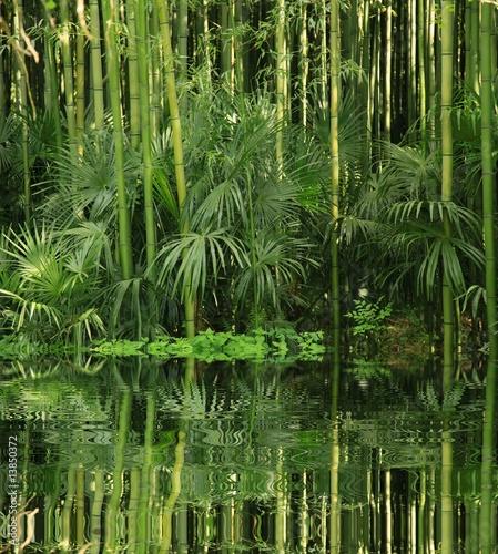 bambou au bord de l eau photo libre de droits sur la banque d 39 images image 13850372. Black Bedroom Furniture Sets. Home Design Ideas