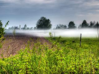 Fogginess in the field