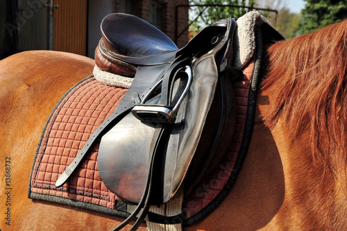 In de dag Paardrijden Gesatteltes Pferd