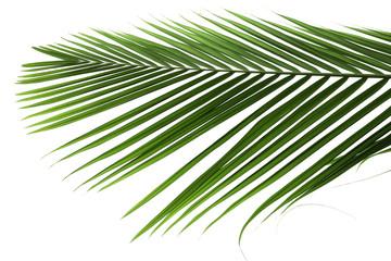 palme verte sur un fond blanc