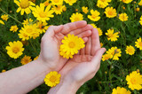yellow flowers in womans hands