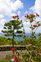 Flowers and Pine on Coastal Hill