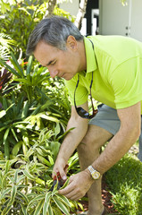 Man cutting plants in a garden with pruning shears