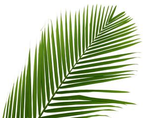 palmette verte