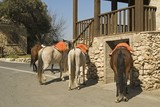 Horses for hire outside restaurant, El Peñon, Sevilla Province, Andalucia, Spain.. poster