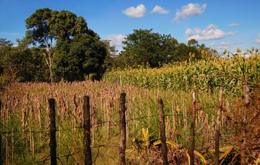 Fence surrounding fields