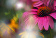Purple cone flower with soft focus