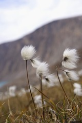Wildflowers blowing in the wind
