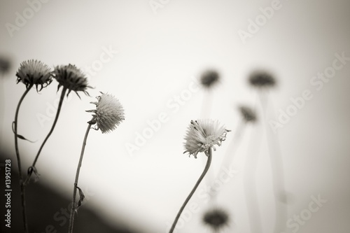 Flowers gone to seed © Vibe Images