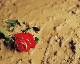 A rose discarded in mud poster