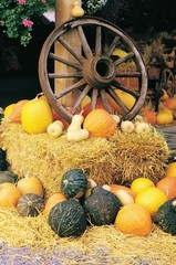 Wagon wheel on a hay bale surrounded by a variety of squash