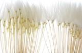soft white dandelion seeds - 13956304