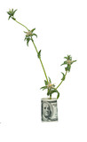 Bur growing from dollar bill poster