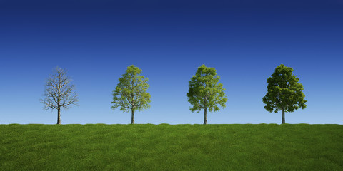 Trees with and without leaves