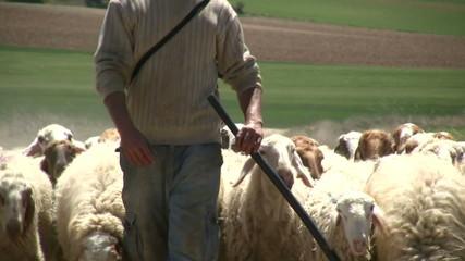 Pastor con rebaño de ovejas