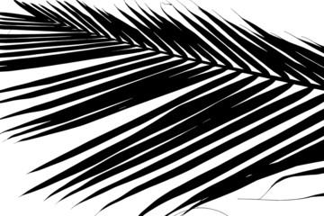 palmette noire