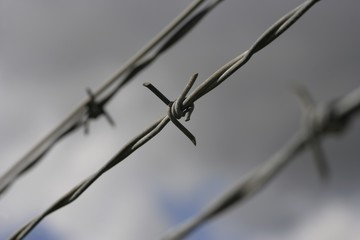 Closeup of barbed wire fencing