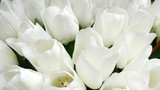 Fake white tulips
