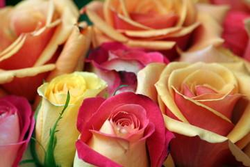 mazzo di rose - dettaglio