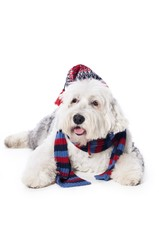 Dog with hat and scarf