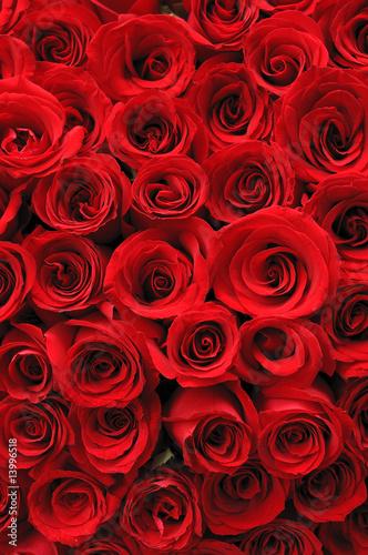 Naklejka Czerwone róże w tle