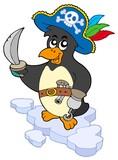 Fototapety Pirate penguin