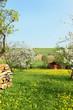 Frühlingsgarten der Rhön