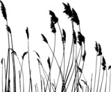 Fototapety real grass silhouette - vector