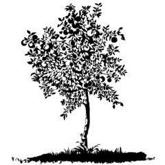 Silhouette of a young apple tree on meadow