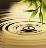 Fresh bamboo leaves over water - Fine Art prints