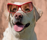 Clever dog in glasses poster