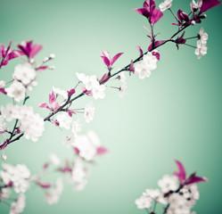 Spring floral background