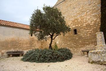 Old olive tree, Les Baux, provence, Frankreich
