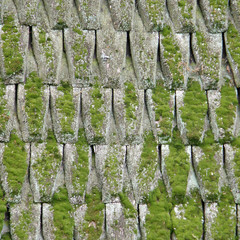 Old wooden roof covered with a moss
