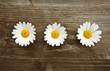 drei margeritenblüten auf holz