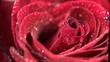 rose_loop