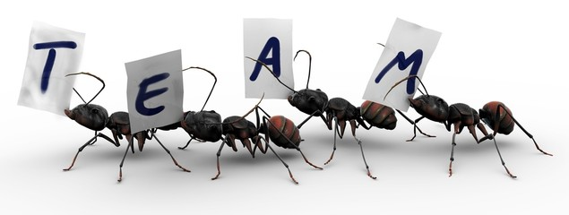 Four Ants Four Ants Team Work