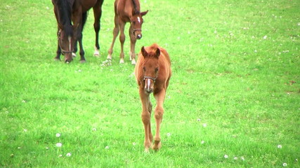 Foal Walking In Pasture