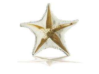 Estrela Marítima