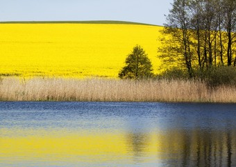 Rape field & lake