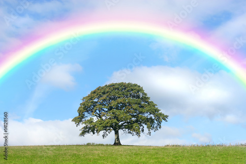 Oak Tree and Rainbow Beauty