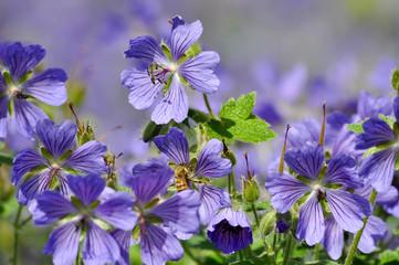 Blumen auf der Wiese