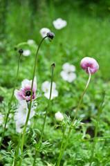 Weiße Blumenwiese