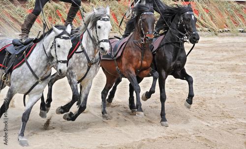 Foto op Plexiglas Paardrijden spectacle equestre