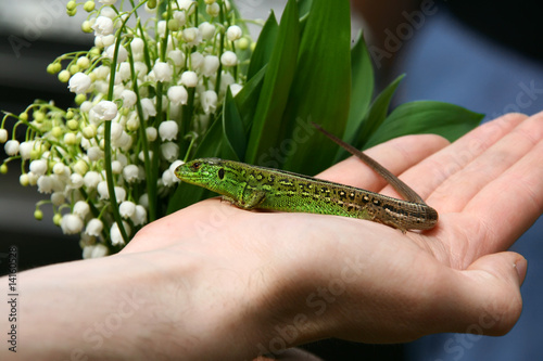 Green lizard and flowers
