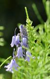 Frühlings im Wald. Glöckchen