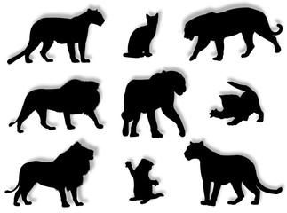 Felini in silhouette