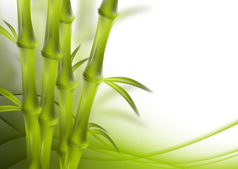 bamboo and abstract background green curves