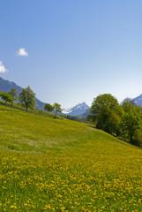 Frühling im Walgau