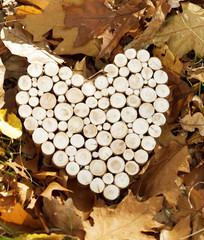 A heart shaped wooden decoration laying on autumn leaves